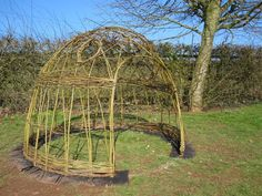 Cute Willow dome.