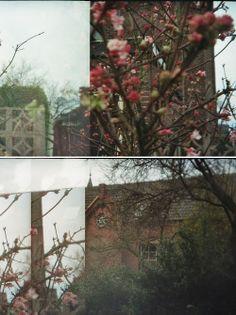 Pink   Holga 135 , Analog Photography