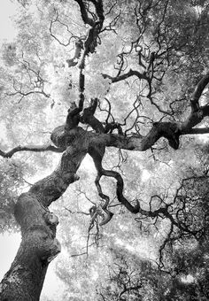 Bad Drawings, Dark Art Drawings, Vintage Nature Photography, White Photography, Ocean Photography, Dark Fantasy Art, Tree Illustration, Illustrations, Tree Of Life Artwork