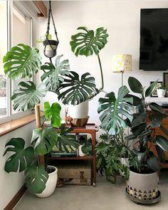 Monstera Deliciosa tropical plants Girlfriend is Better Indoor Tropical Plants, Outdoor Plants, Monstera Deliciosa, House Plants Decor, Plant Decor, Faux Philodendron, Plantas Indoor, Plant Aesthetic, Decoration Plante