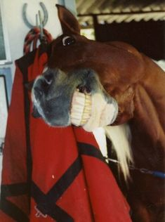 What a face! Horse humor. Love it I couldn't stop laughing
