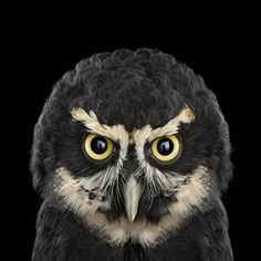 Owl Portraits by Brad Wilson › Inspiration Now