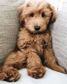 Best Dog Breeds: The Top 20 List - - Best Dog Breeds: The Top 20 List Cute Puppies & Dogs Does it get any cuter than this? What is your favorite dog breed? Cute Baby Animals, Animals And Pets, Funny Animals, Wild Animals, Jungle Animals, Forest Animals, Nature Animals, Farm Animals, Phteven Dog