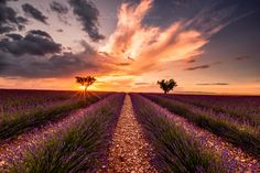 The Purple Dream by Anthony Million on 500px