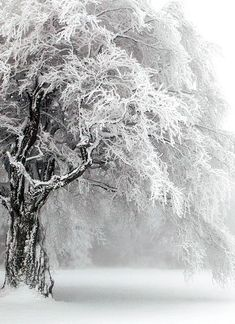 Find images and videos about white, winter and snow on We Heart It - the app to get lost in what you love. Winter Szenen, I Love Winter, Winter Magic, Winter Trees, Winter Christmas, Snowy Trees, Winter White, Snow White, Foto Picture