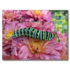 """Lonely Caterpillar & """"missing you"""" postcard  Sold 12/3/13 #Lonely #Caterpillar #missingyou #postcard"""