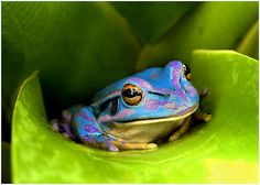 Another pretty colored frog