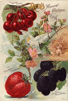 Seed Catalogs from Smithsonian Institution Libraries  indigodreams:       smithsonianlibraries:     Back cover of Everything for the Fruit Grower (1896) from E.W. Reid's Nurseries out of Bridgeport OH. See more examples in our Seed Catalog collection. Happy Vernal Equinox!