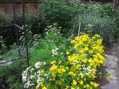 Camomile and primrose