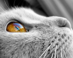 Cat's eye  photography   at http://www.etsy.com/listing/108775284/black-and-white-photography-cat