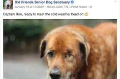 """""""Old Friends Senior Dog Sanctuary"""" Is The Best Facebook Page Ever And You Need To Follow It"""