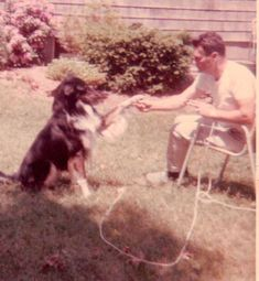 Buck, Collie or Collie mix, circa 1965 Collie Breeds, Scotch Collie, Collie Mix, Livestock, Dogs, Animals, Animales, Animaux, Doggies