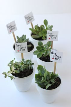 Valentine's Day is right around the corner. Surprise your love with a DIY: Valentine's Day Succulent Party Favors (with printable).