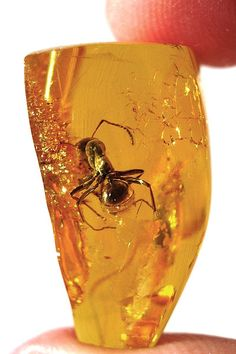 I like bugs, is that weird? An ant encased in amber (fossilized tree resin). Amber has been known since at least the fourth century BC and was used as fuel in ancient times, as well as jewelry, a use which continues to this day. Minerals And Gemstones, Rocks And Minerals, Amber Fossils, Mineral Stone, Rocks And Gems, Amber Jewelry, Mellow Yellow, Stones And Crystals, Gem Stones