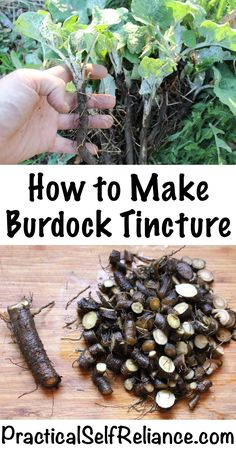 How to Make Burdock Tincture