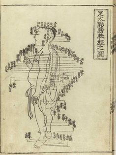 An introduction to and listing of the Yuan Source Points used in the practice of acupuncture and Oriental Medicine.