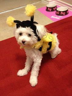 Villas of Vista Ridge Pet Costume Contest winner goes to Bella the Bumble Bee!! https://www.facebook.com/VillasofVistaRidge