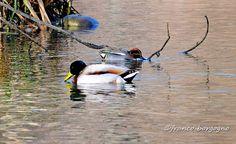 Uno dei luoghi in cui godersi il meglio della #primavera: Oasi Crava Morozzo, #birdwatching #foto #natura #ornitologia #lipu http://www.thewildandthecity.com/?p=81