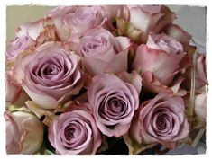 Antique mauve roses