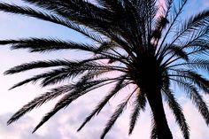 6 x Holiday randoms // Mariannan Flora And Fauna, Travelling, Holiday, Plants, Vacations, Holidays, Plant, Planets, Vacation