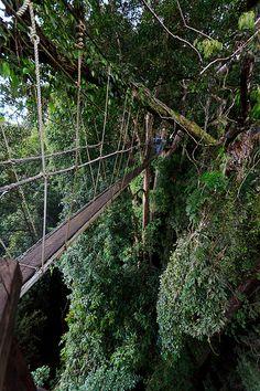 2011_11_Malaysia_4_Kota Kinabalu_20111125_140328.jpg by liquidkingdom, via Flickr