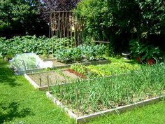 All about crop rotation for vegetable gardens