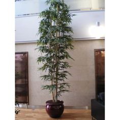 plant a low grower under a large plant in the same pot bring nature inside pinterest tall indoor plants indoor and plants
