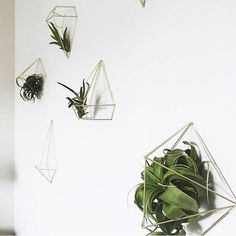 Spring wall decor with Umbra Prisma decor and Airplants Styling and photography by @oakandtwine #Umbra
