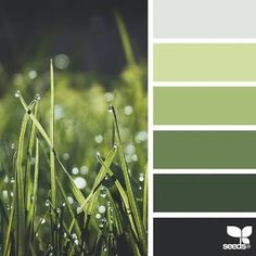 Image Result For Green Colour Palette