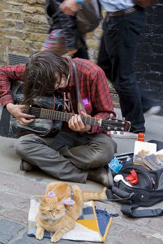 James Bowen and a Street Cat Named Bob A Cat Named Bob, Kittens Cutest, Cats And Kittens, Bobcat Pictures, Street Cat Bob, Animal Gato, Best Friends For Life, Small Cat, All About Cats