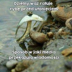 Funny pictures about That Snake Is A Hero. Oh, and cool pics about That Snake Is A Hero. Also, That Snake Is A Hero photos. Your Smile, Make You Smile, World Biggest Snake, Stranger Things, Cool Snakes, Cool Pictures, Funny Pictures, Funny Pics, Animal Pictures