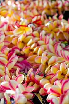 plumeria leis---they smell fabulous---my niece and her husband bought me one when I went to Hawaii to viist them this past JUNE. Hawaii Flowers, Plumeria Flowers, Tropical Flowers, Lilies Flowers, Cactus Flower, Exotic Flowers, Flowers Garden, Purple Flowers, Hibiscus