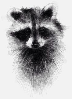 Racoon, sketch,traditional drawing with digital finish