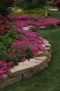 I love the flowers as a border here. They will be beautiful as they cascade over The Tan-Gold Bricks,,Awesome,Huh!