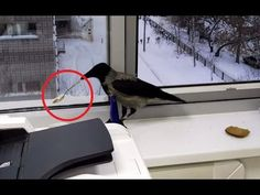 Cheeky Crow Steals A Spoon: http://cutesypooh.com/cheeky-crow-steals-spoon/