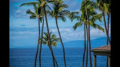 Wailea Elua 2 Bedroom Condo Seconds from Magnificent Ulua Beach... http://www.islandsothebysrealty.com/listing/375775-3600-wailea-alanui-dr-1505-waileamakena-hawaii-96753/ Wailea Elua 1505 is listed by Ryan MacLaughlin, R(B) and Rick Brandt, R(S). This completely renovated first floor unit is in the lower third of this highly desirable complex. See MLS #375775 for more on this extraordinary property