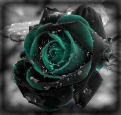 Black & Green Rose