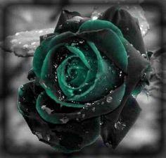 Black & Green Rose