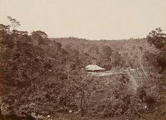 Koffie- en indigo-onderneming Kredjo ten oosten van Soerakarta. 1880