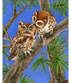 This watercolor painting shows two playful Screech Owls high up in a pine tree. Click the link to see how this painting was made: http://tracylizottestudios.com/index.php/post/103-the-making-of-owl-tree