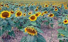 A Cool Weekend - Abruzzo National Park | Webflakes