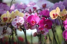 Kwiaty w domu. Aby znów zakwitły