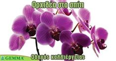 Βασικές φροντίδες για την ορχιδέα Home And Garden, Hair Accessories, Flowers, Plants, Beauty, Gardening, Garden Ideas, Decoration, Tips