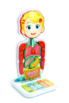Safari Ltd. Human Organs TOOB - Quality Construction from Safe and BPA Free Materials Toy, Multicolor Educational Software, Educational Games, Student Login, Education And Development, School Videos, Science Kits, Human Body, Big Kids, Safari
