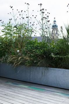 53 Ideas For Terrace Garden Rooftop Shade Balcony Plants, Outdoor Plants, Outdoor Gardens, Balcony Gardening, Roof Gardens, Rooftop Terrace, Terrace Garden, Rooftop Lounge, Shade House