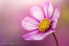 in my heart by honeybee22. @go4fotos