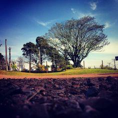 Nova Petropolis #tree #arvore #blue #azul