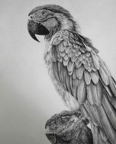 Hyper Realistic Tear Drawings | Hyperrealistic Pencil Drawings By Monica Lee (8 Pictures)