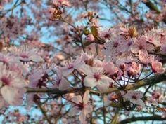 Tavaszköszöntő-Fülemüle szonáta(madár csicsergés,tavaszi hangulat)