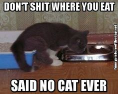 Dont Shit Where You Eat Said No Cat Ever Funny Lol Cats   ...........click here to find out more     http://googydog.com
